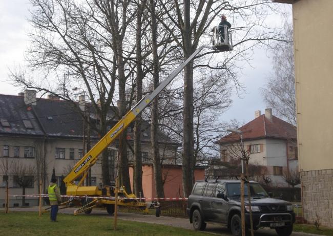 Fotografie ke článku: U gymnázia padají větve, lidé se ptají proč