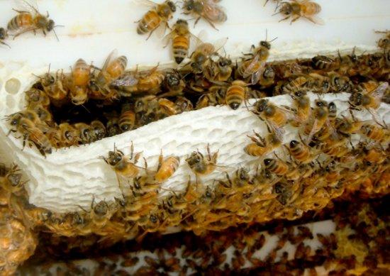 Fotografie ke článku: Nedaleká včelí farma se otevřela veřejnosti